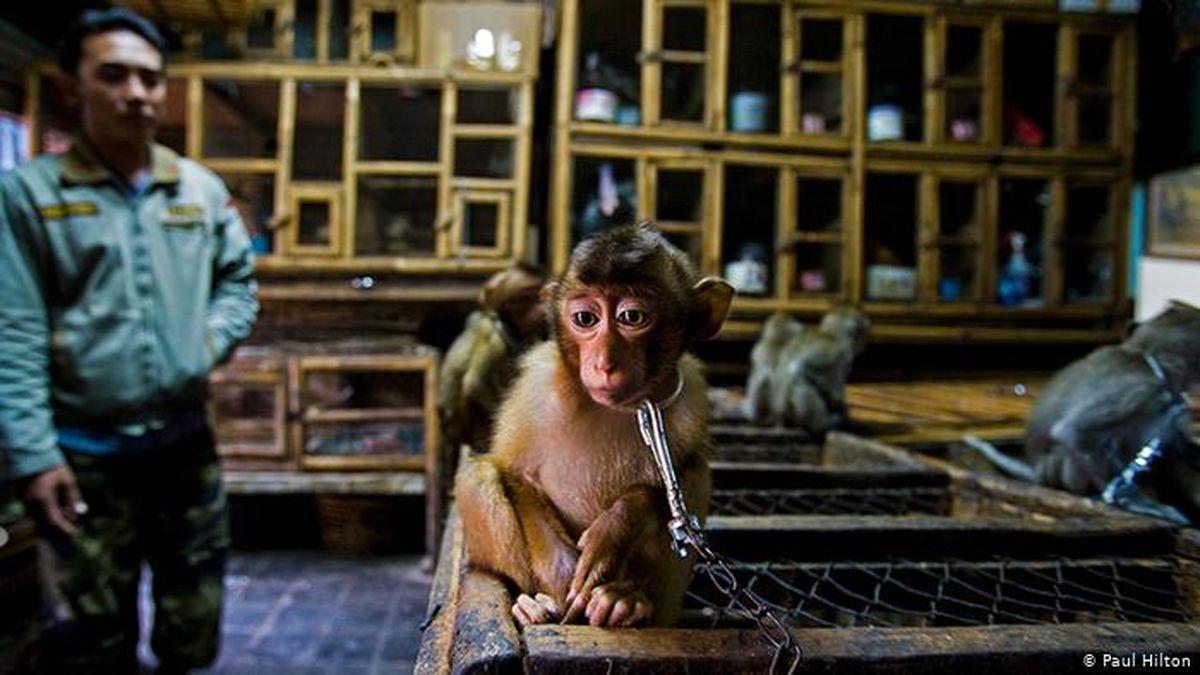 برترین عکسهای دنیای حیات وحش سال۲۰۲۰