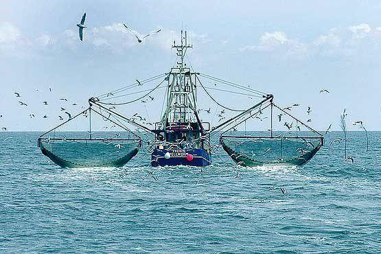 ذوالقدر: کشتیهای چینی از راههای دیگر وارد میشوند
