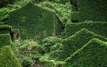 روستایی که طبیعت آن را میبلعد +تصاویر