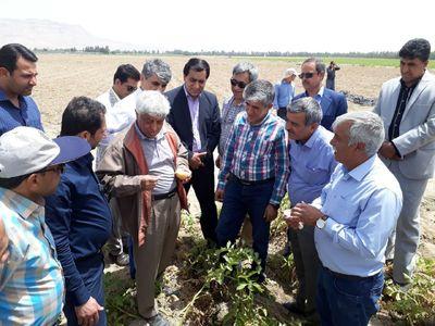 دولت مشکل صادرات محصولات کشاورزی را رفع میکند