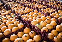 دپو مقادیر قابل توجه میوه قاچاق در مرزها/ احتمال بالارفتن قیمت پرتقال!