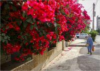 اهواز در محاصره گلهای کاغذی +عکس