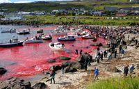 سنت خونین دانمارکیها جزایر فارو را سرخ کرد +عکس