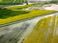 سیل ۶۱۶۶میلیارد تومان خسارت به کشاورزی وارد کرد