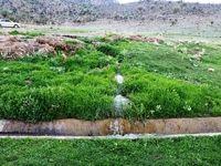 طبیعت بهاری جنگلهای باغ معدن در چاهک +تصاویر