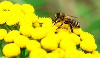 حمله زنبورهای عسل به منزل مسکونی