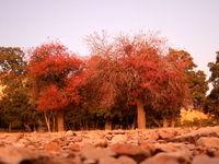 طبیعت پاییزی یاسوج +تصاویر