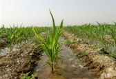 کشاورزی در شرایط تحریم رشد مستمر داشته است