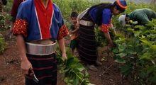 تولید ابریشم در میانمار +تصاویر