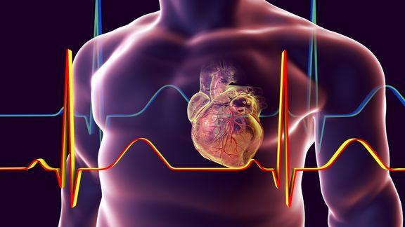 اصلاح ژن نرخ مرگ ناشی از اختلالات قلبی را کاهش میدهد