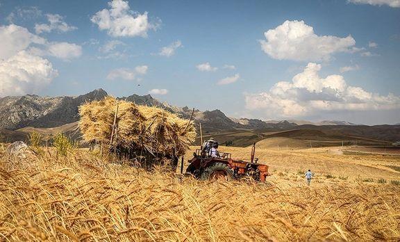 افزایش ۲۳درصدی خرید گندم مازاد بر نیاز کشاورزان