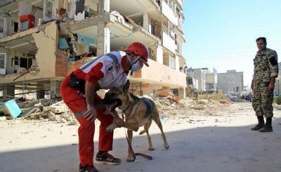 موفقیت سگهای زندهیاب در نجات 6 زلزلهزده از زیر آوار