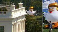 بالن خروسی شبیه به ترامپ در مقابل کاخ سفید +عکس