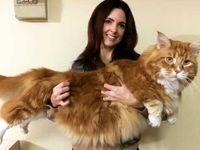 بزرگترین گربه جهان +عکس