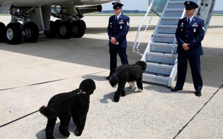 سگ اوباما
