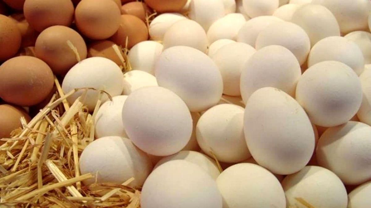 منشأ تورم تخممرغ کجاست؟