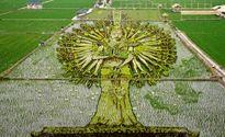 هنرنمایی کشاورزان در شالیزار! +تصاویر