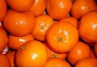 پرتقال و نارنگی رنگشده نخرید
