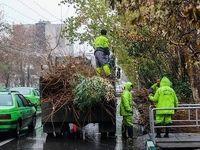 شهرداری تهران از ترس بارش برف درختان را هرس کرده؟!