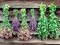 رونق صنعت گیاهان دارویی در انتظار بخش خصوصی