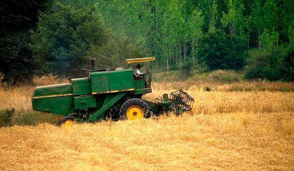 خروج گندم از چرخه خرید تضمینی/ گندمها قاچاق، احتکار و یا خوراک دام میشود
