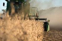 قیمت گندم یکساله ۳۲.۵درصد افزایش یافت