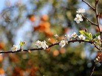 شکوفههای حیرت انگیز زمستانی +عکس