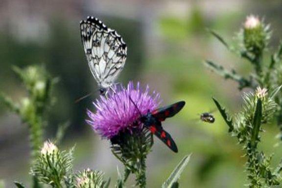 هجوم میلیونها پروانه به شهرهای جنوب شرق تهران