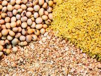 ارز مورد نیاز واردات نهادههای دامی تامین شد