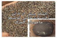 کشف بیش از ۵تن دانه خشخاش در یک تریلر