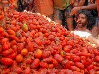 فستیوال گوجه فرنگی در اسپانیا +تصاویر