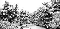 روز برفی بوستان یاس تهران +تصاویر