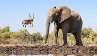 لحظهای باورنکردنی در حیات وحش +عکس