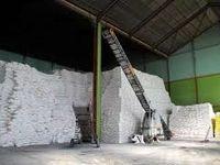 خودکفایی تولید شکر نزدیک است/ شکست رکورد جهانی تولید کلزا تا ۳سال آینده
