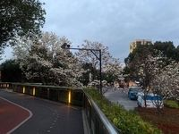 شانگهای در قرنطینه در آستانه فصل بهار +عکس