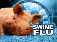 تکذیب شیوع آنفلوانزای خوکی
