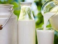 نرخ جدید خرید شیرخام هنوز ابلاغ نشده است/ خرید شیر از دامدارن بالاتر از نرخ مصوب دروغ است