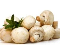 صادرات قارچ روزانه 60هزار دلار ارزآوری دارد/ درآمد ارزی 144میلیون دلار در ماه در صورت رفع موانع صادرات به روسیه