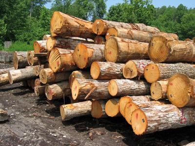 وابستگی بازار چوب به واردات