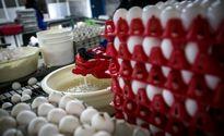 تخممرغ کیلویی ١٨٠٠ تومان ارزان شد