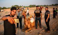 مسابقات شتر سواری در حمیدیه +تصاویر