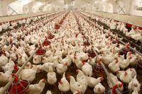 مرغ از قفس قرارگاه هم پرید