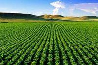 ۴۰کالای کشاورزی معاف از پرداخت مابهالتفاوت ارز شدند