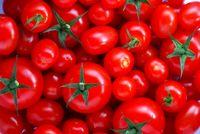 صادرات گوجهفرنگی گلخانهای با دریافت تائیدیه مقدور است