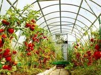 راهاندازی سامانه رصد و کنترل تولید پیاز ، گوجهفرنگی و سیبزمینی