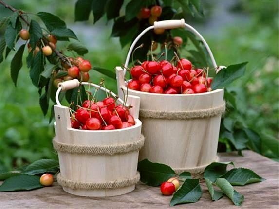 میوههایی که شما را از بیخوابی نجات میدهند!