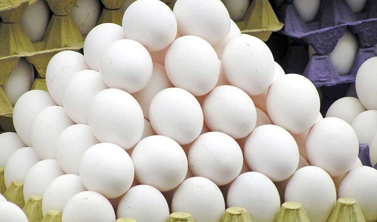 رکوردزنی قیمت تخممرغ در بازار مواد پروتئینی