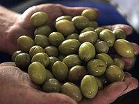 کاهش قیمت زیتون در شهریورماه