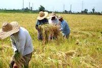 افت مشاغل کشاورزی در ۱۴سال گذشته