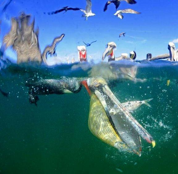 آخرین لحظات عمر یک ماهی +عکس